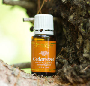 Young Living Cedarwood Essential Oil Young 15ml