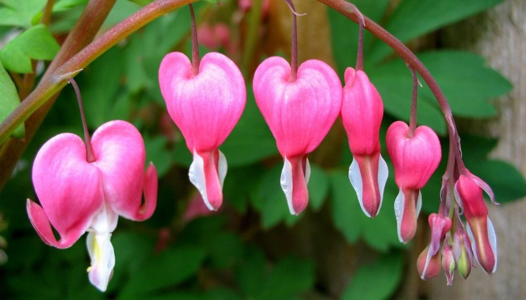 spring-flowers-1399518